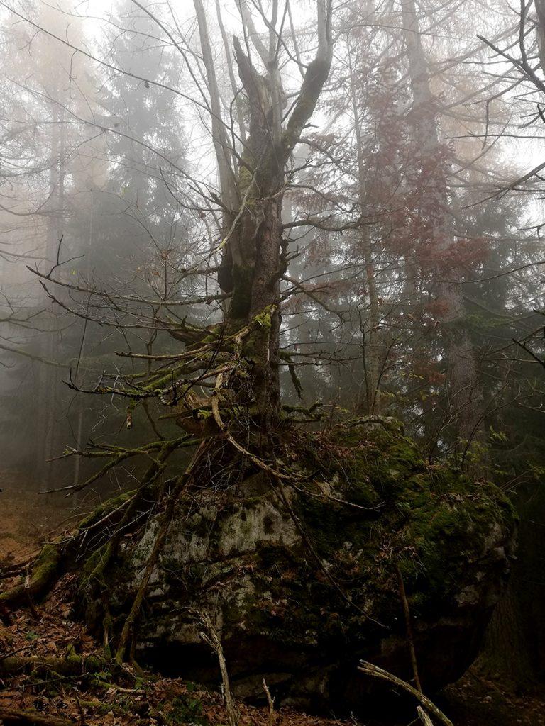 Mystischer Baum auf einem Felsen
