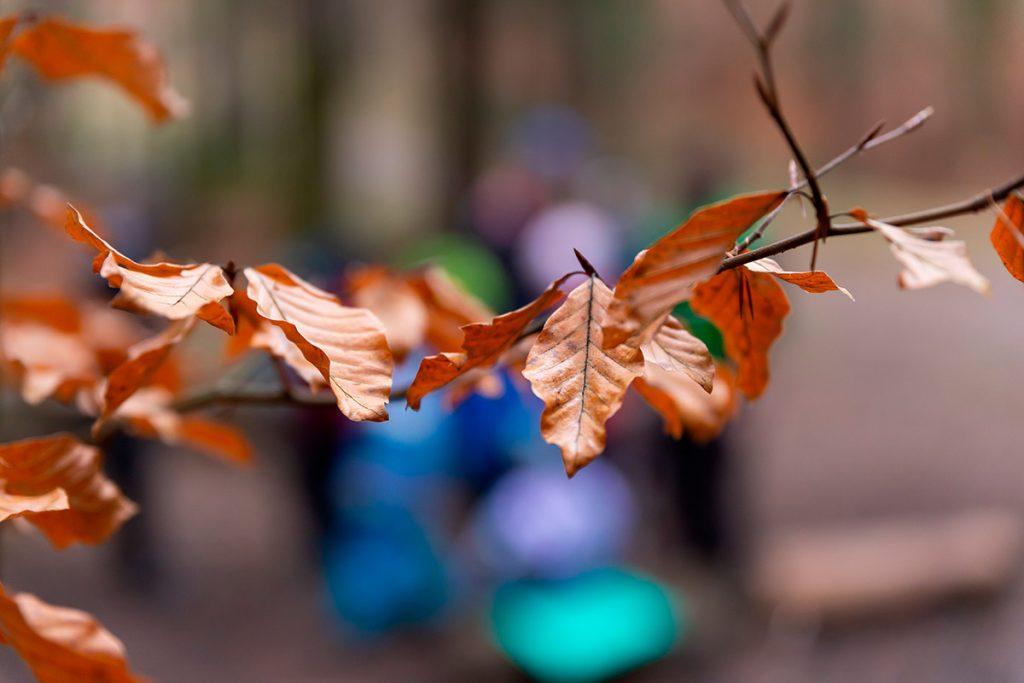 Zweig mit trockenen Blättern