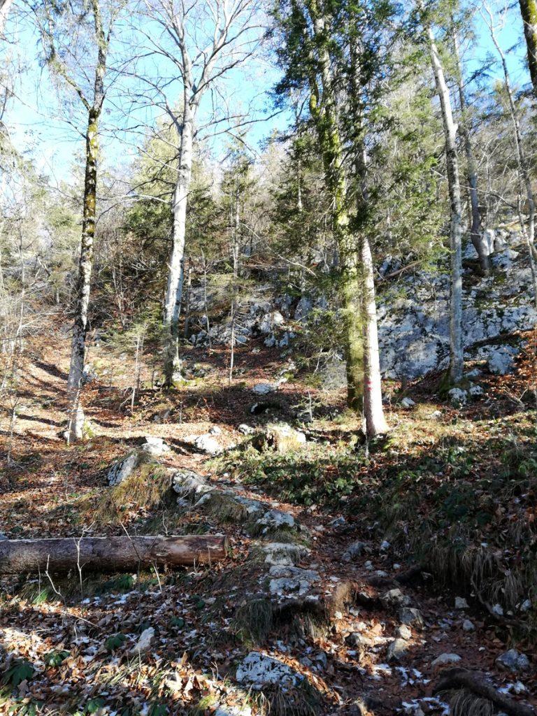 Waldweg nach oben
