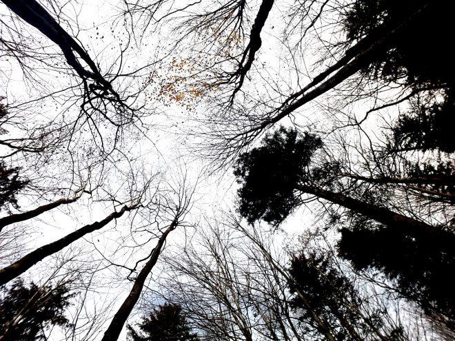 Blick nach oben in die Baumkronen