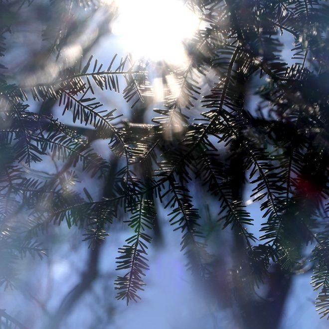 Sonne blinzelt hinter Zweigen hervor