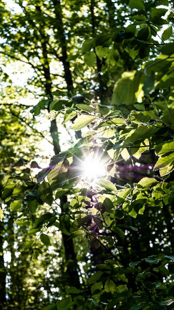 Sonne blinzelt durch das Blätterdach