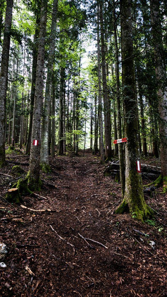 gut beschildeter Weg durch den Wald
