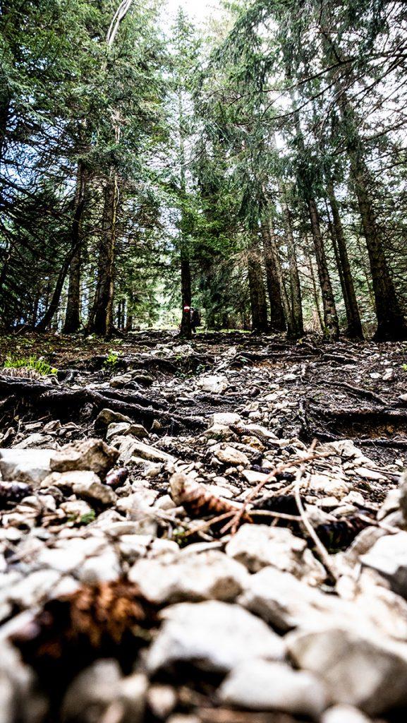 holpriger Weg durch den Wald