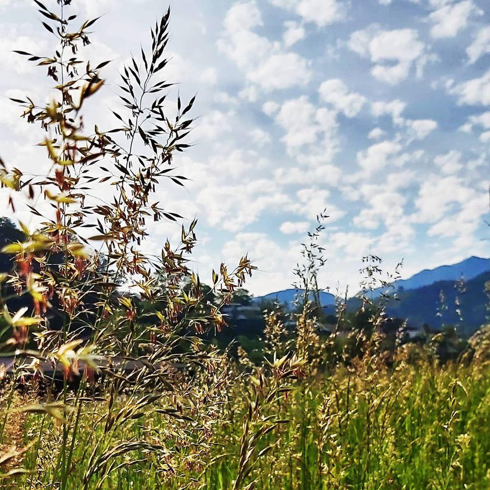 Wiese mit hohem Gras und Berge im Hintergrund
