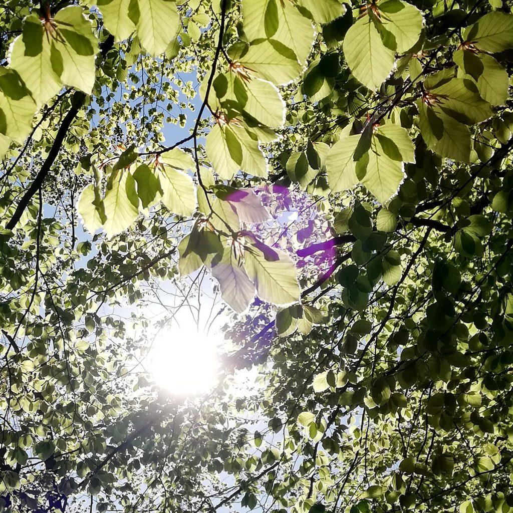 Sonne blinzelt zwischen Baumkronen hervor